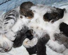 Новорожденные малыши с кошкой