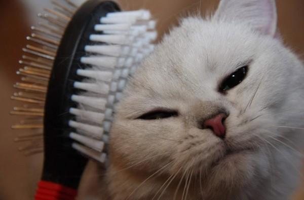 кошка и расчёска фото