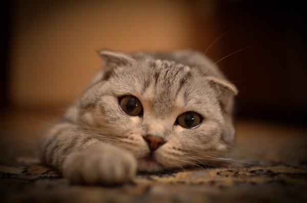 грустный котёнок фото
