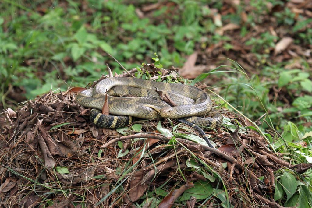 Змеи на гнезде