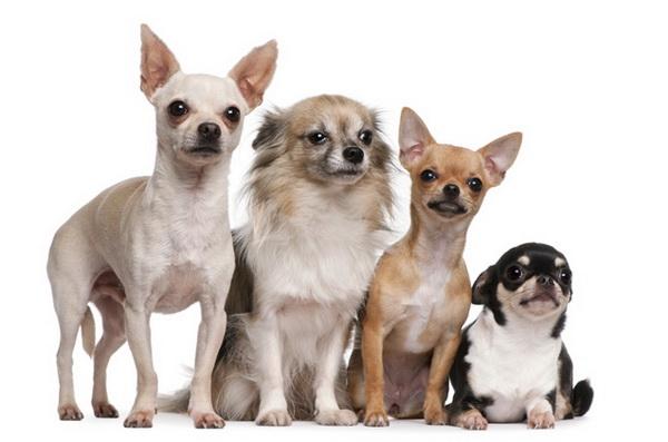 Собачки разного типа