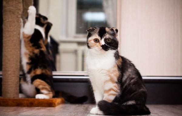 Кошки в питомнике