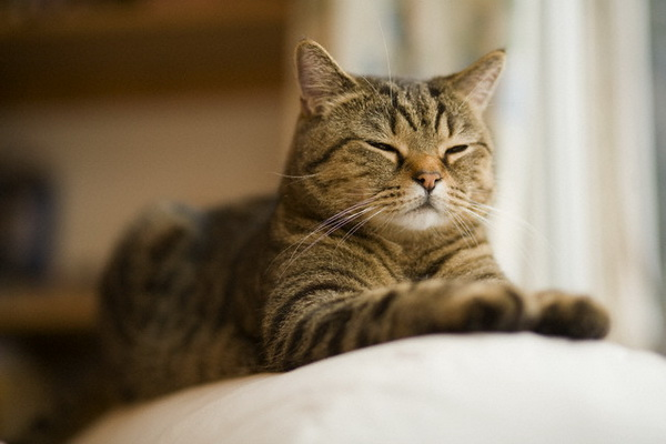 Может ли кошка метить территорию как кот