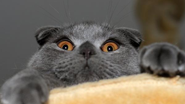 Милая мордашка котика