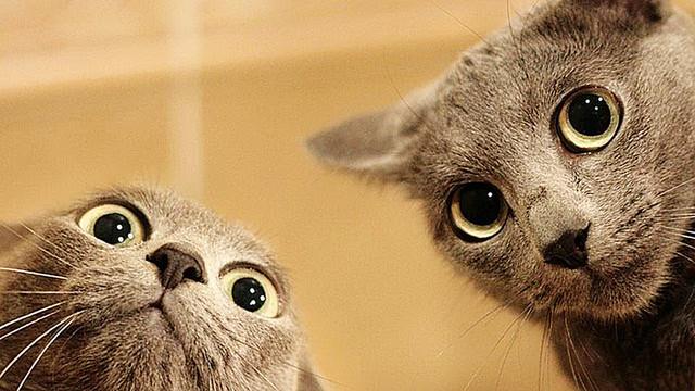 Две мордочки котиков
