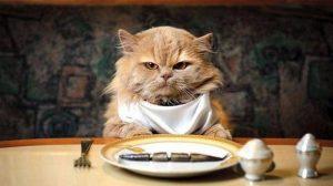 Кот за обеденным столом