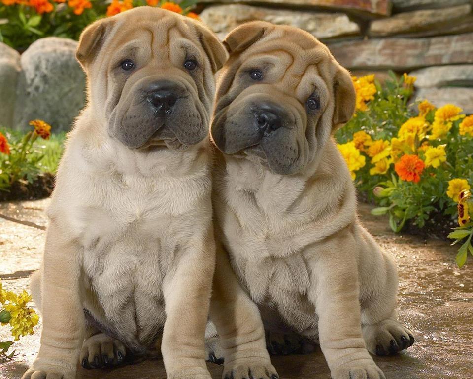 Милые собаки в окружении цветов