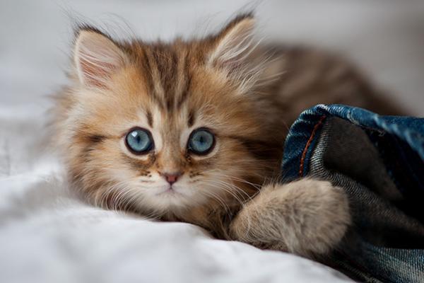 Котенок играет с одеждой
