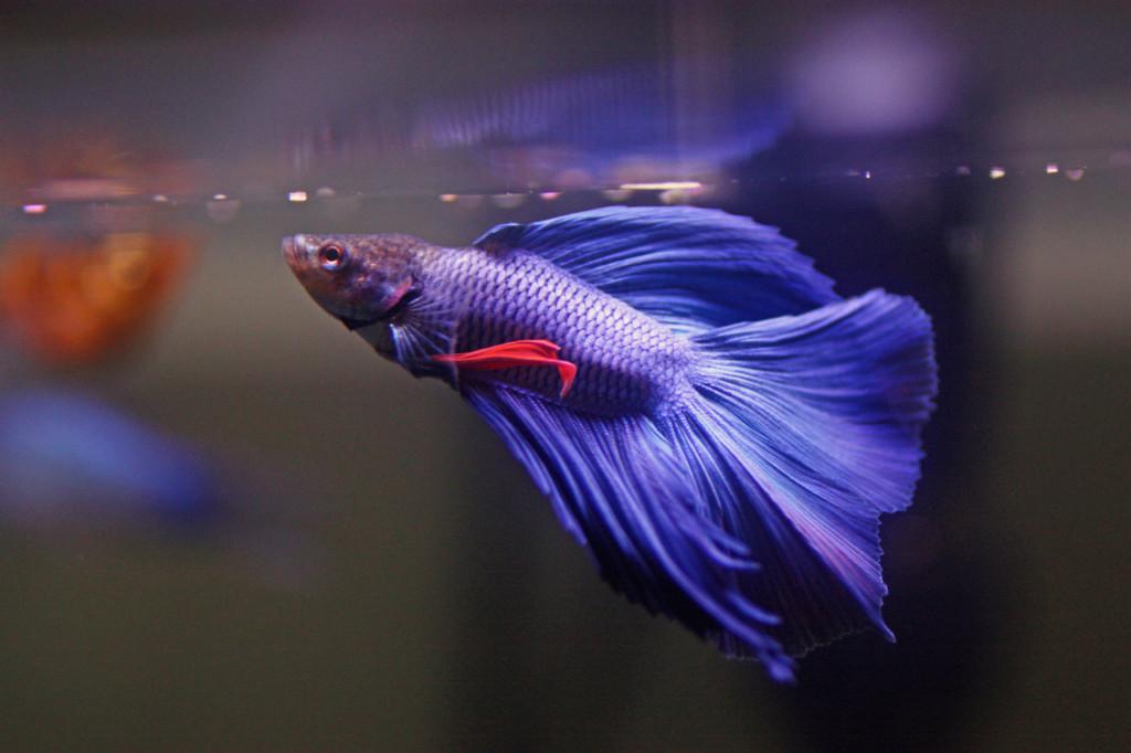 Рыбка поднялась к поверхности