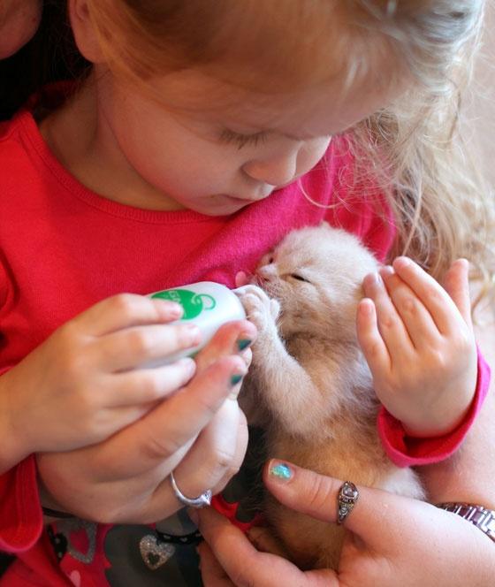Девочка кормит котика с бутылочки