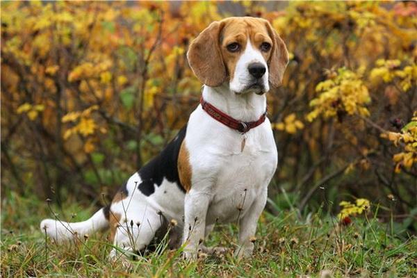Красивый пес на природе