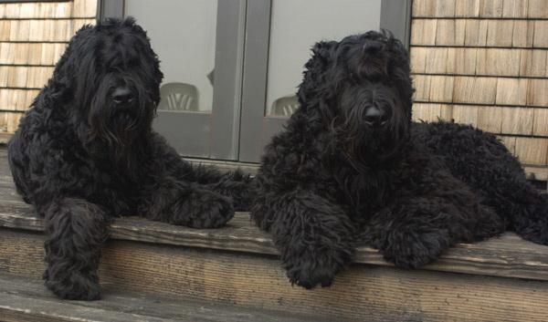 Две собаки на страже
