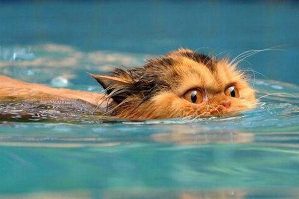 Питомец плывет в воде