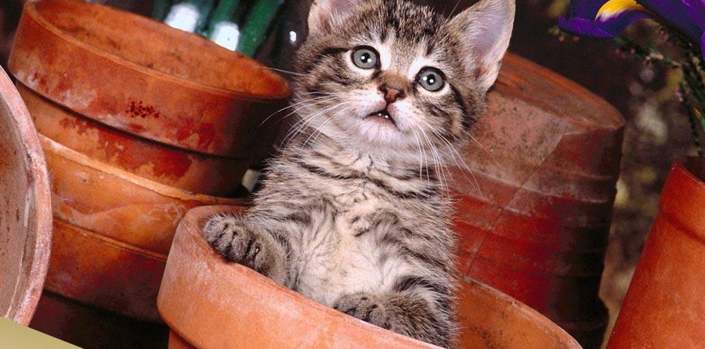 Котенок сидит в цветочном горшке