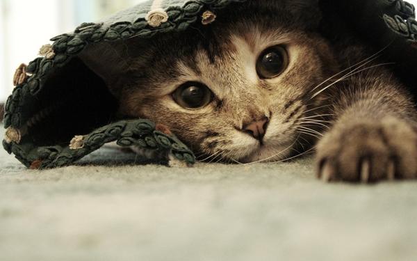 Котенок лежит под ковриком