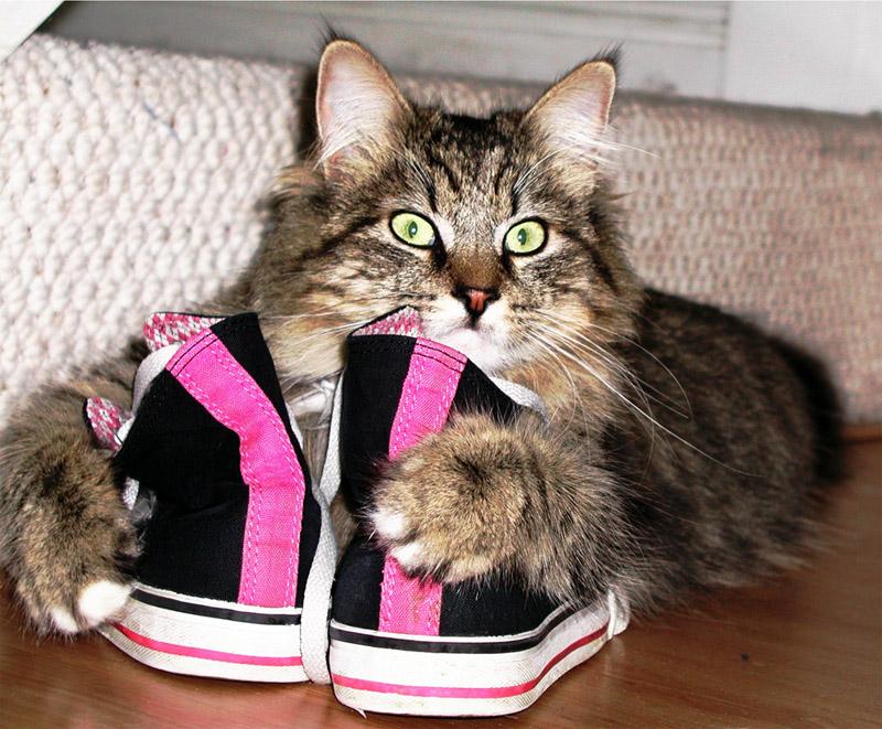 Кот сидит на обуви