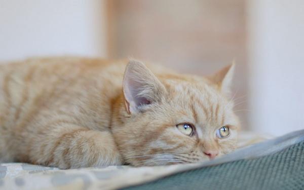 Грустный рыжий котик