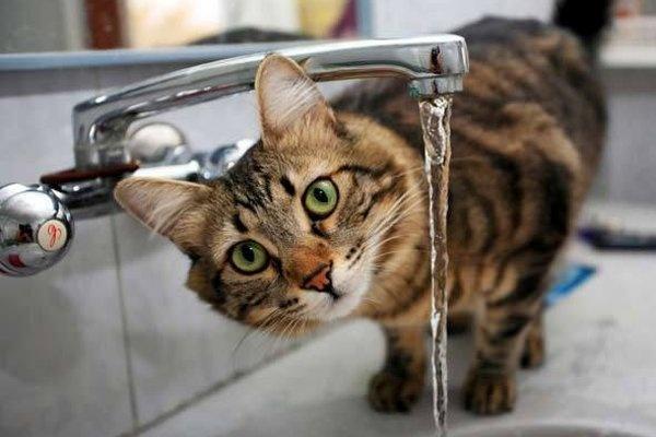 Кот возле крана с водой