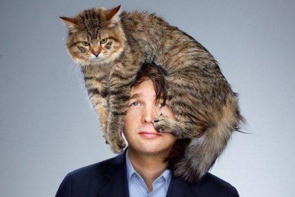 Хмурый кот на голове у мужчины