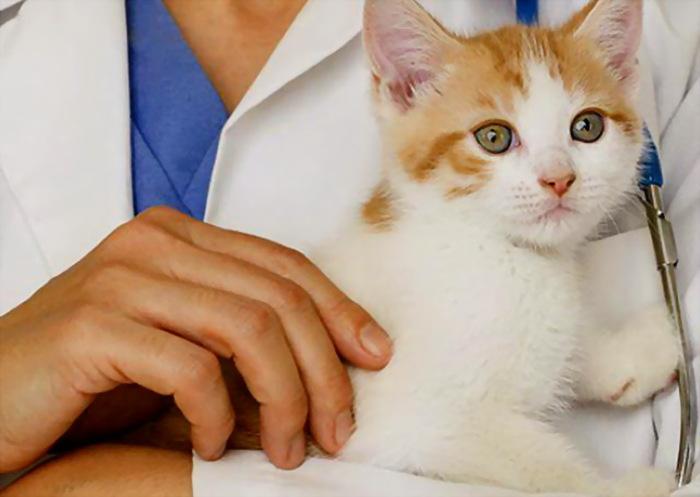 Котенок на руках у врача