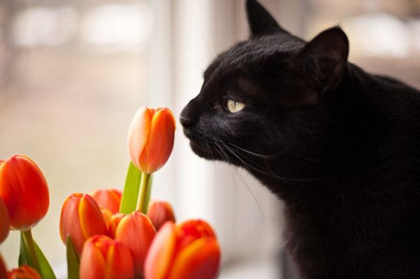 Как назвать черного кота мальчика или котенка девочку черного цвета