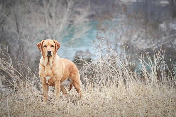 Пес стоит в поле