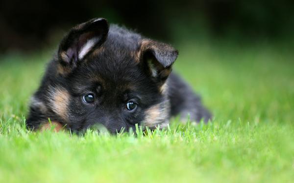 Щенок на прогулке в траве