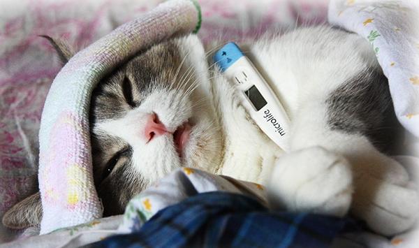 Кот с градусником