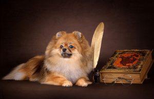 Маленькая собачка возле книги