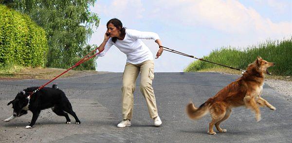 Человек с двумя псами на прогулке