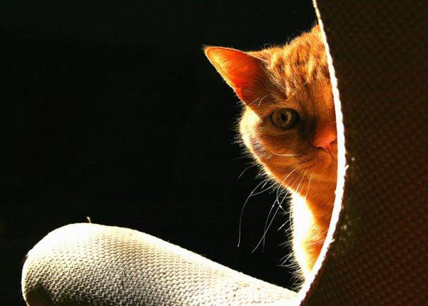 Рыжий кот выглядывает из-за дивана