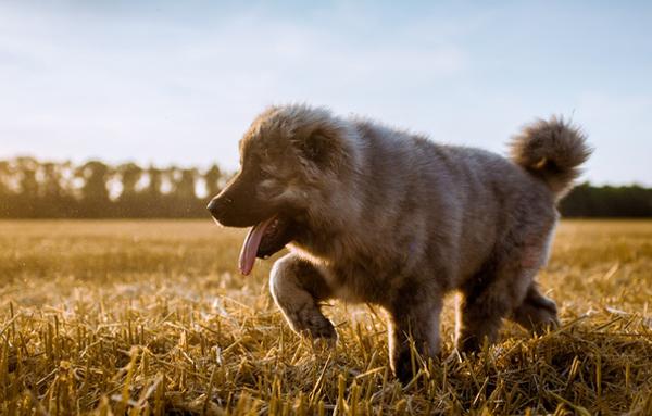 Пес прогуливается на желтом поле