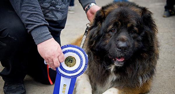 Красивый породистый пес с медалью