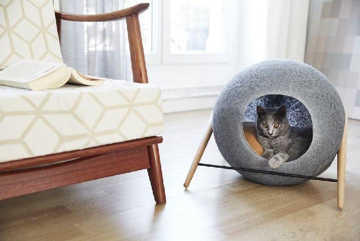 Комфортные условия для кота
