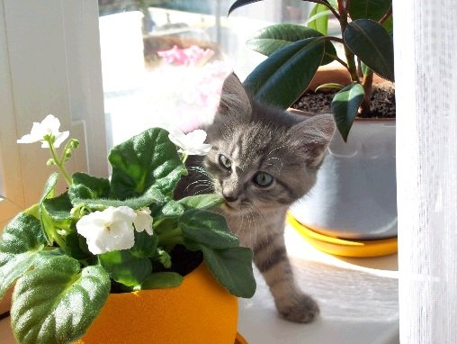 Кот ест цветы