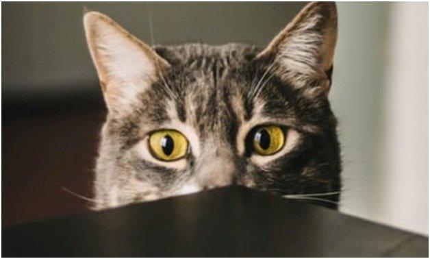 Не пускать кота на стол