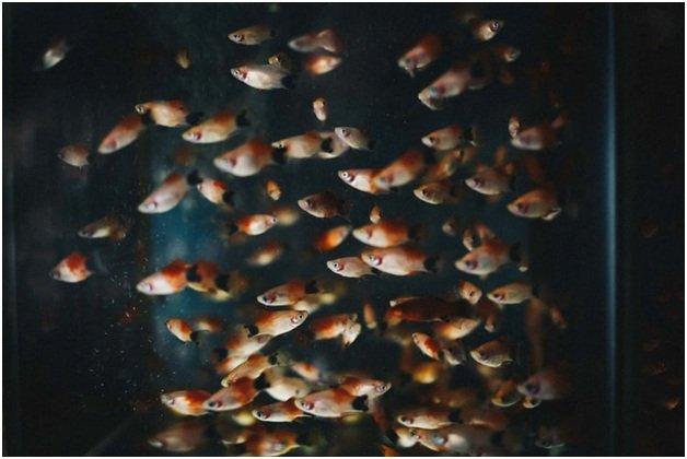 Нужна ли аэрация аквариума