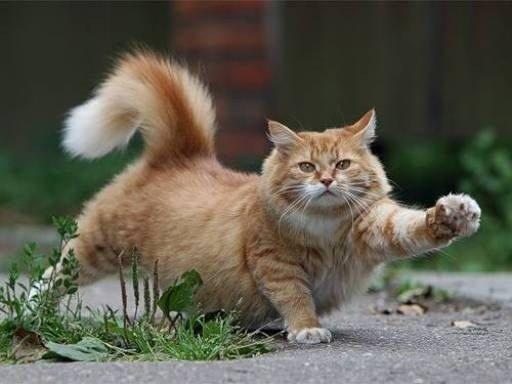 Обеспечьте коту движение