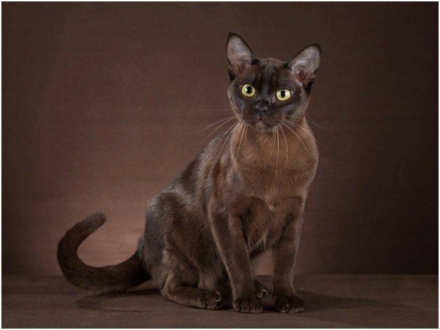 Уровень развития кошки